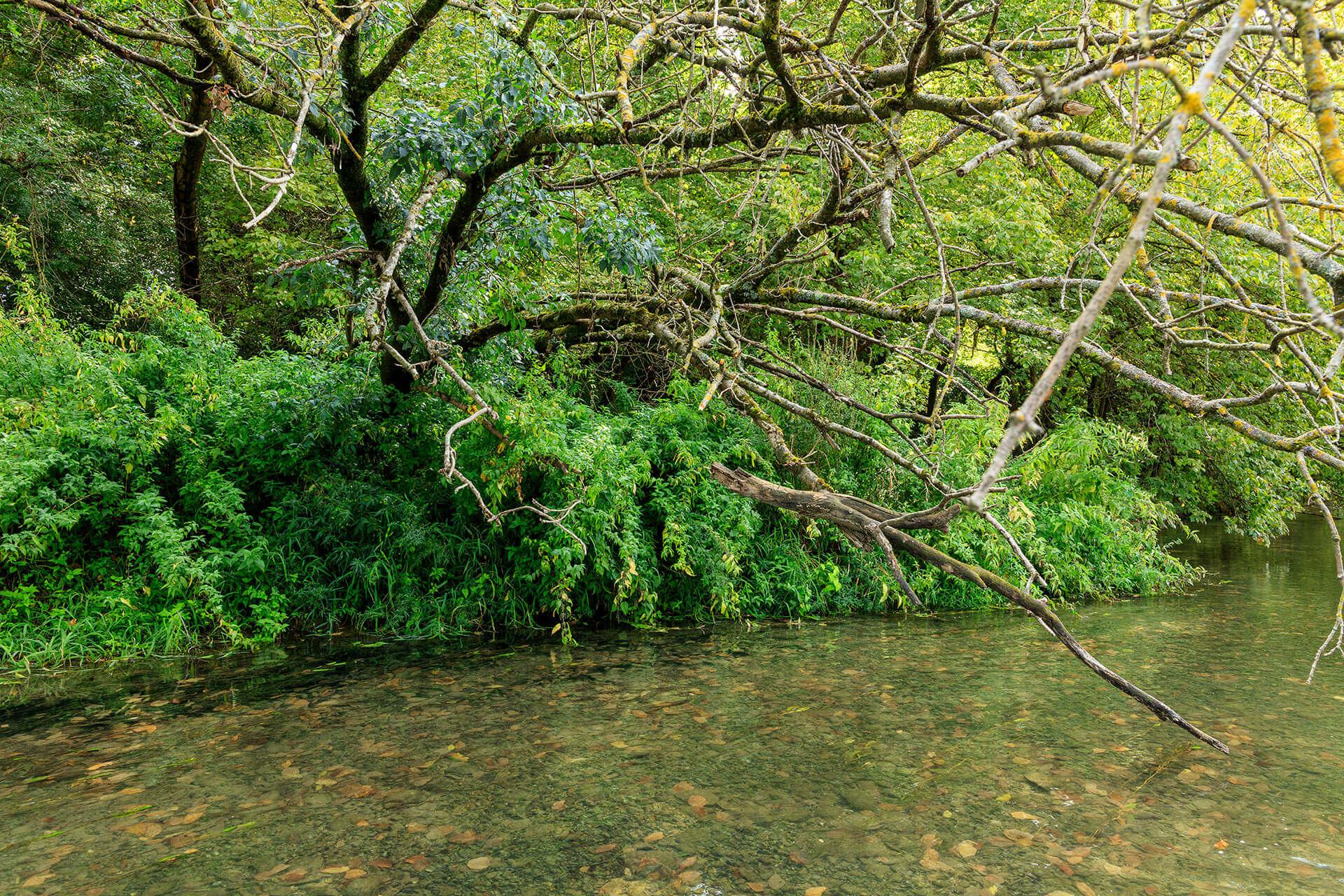 Le fleuve Rhône, Km 501 Isère, Sablon, Réserve naturelle Ile de la Platière