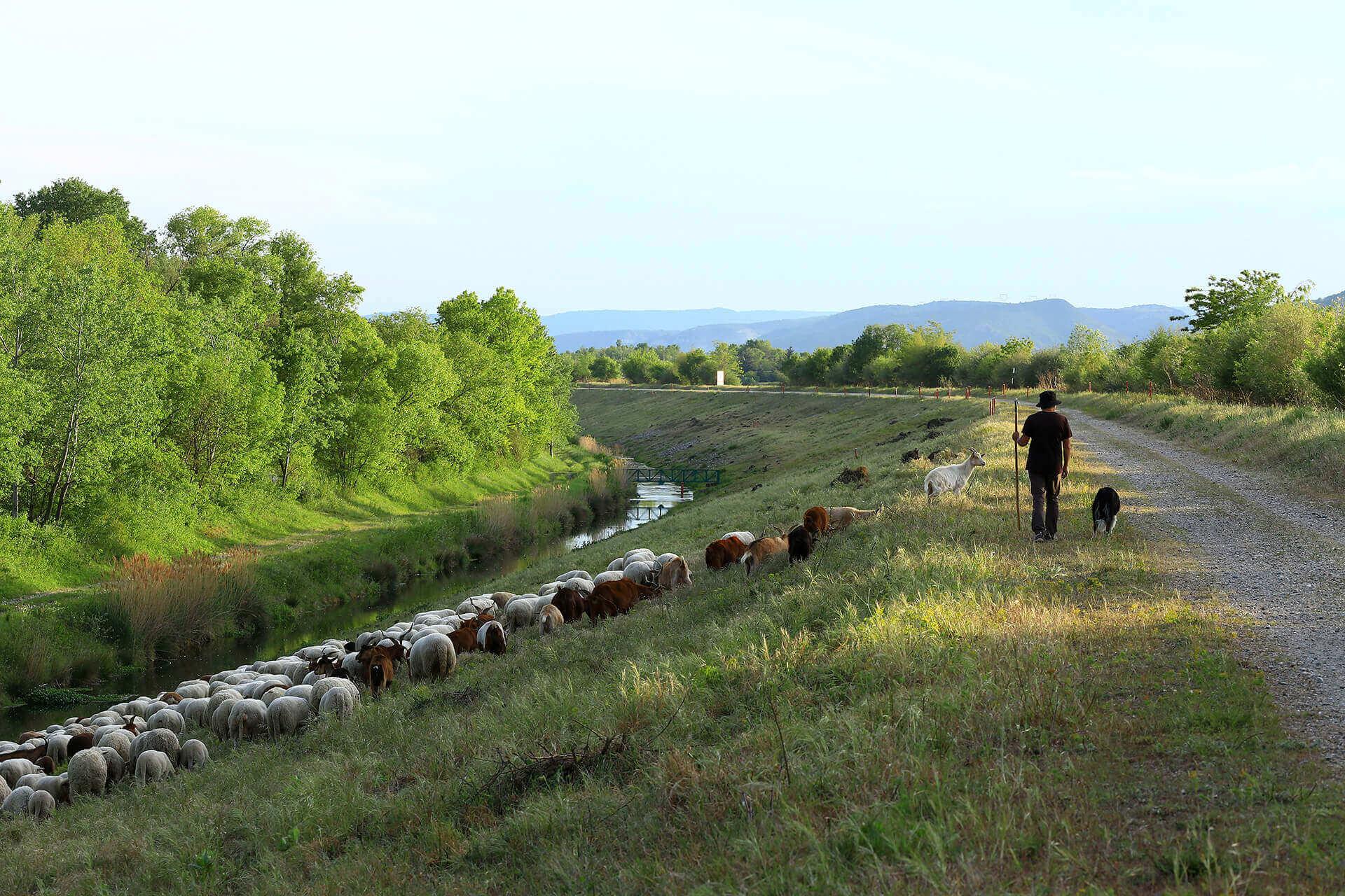 Le fleuve Rhône, Km 559 Drôme, Portes-lès-Valence
